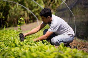 projet agroforestation lamazuna